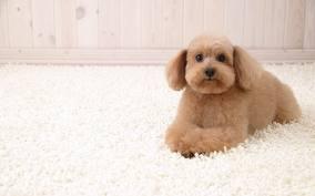 divulgar seviços de pet shop